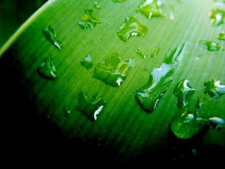 Agua sobre Amarilis